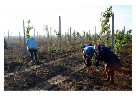 На роботу -  Посадка дерев та інші садівничі роботи